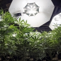 Area Law Enforcement Continues To Take Down Illegal Grow Operations